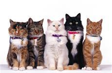 В Самаре состоится международная выставка кошек