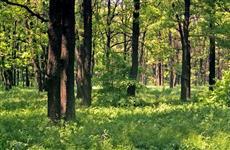 """Участие в нацпроекте """"Экология"""" позволит повысить качество работ по лесовосстановлению в Ульяновской области"""