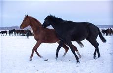 В Красноярском районе обсудили развитие коневодства