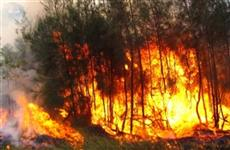 Локализован пожар в нацпарке Бузулукский Бор в Самарской области
