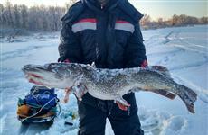 """""""Это крокодил"""": на Васильевских островах пойман очередной трофейный хищник"""