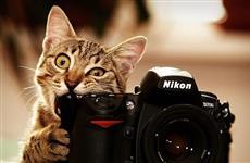 Прицениваемся к новым моделям фотокамер