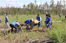 В Тольятти готовится посадка леса в честь героев Первой мировой