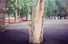 В самарском парке деревья закатали в асфальт