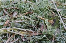 В Самарской области прогнозируют первые заморозки