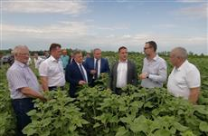 """Сингента"" локализует в Самарской области производство семян гибридов подсолнечника"