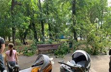 В парке Гагарина огромная ветка упала на коляску с младенцем