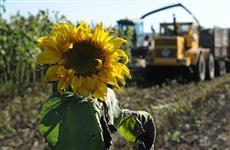 В Оренбуржье продолжается уборка подсолнечника и кукурузы на зерно