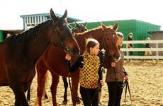 Большой лошадиный секрет: где в Самаре научиться верховой езде?