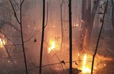 Под Самарой и в Тольятти тушат два крупных лесных пожара