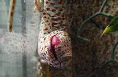 Самарский зоопарк приглашает на кормление рептилий