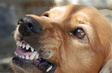 Житель губернии заплатил более 250 тыс. руб. за нападение его собаки на соседку