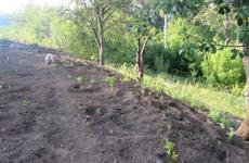 За выращивание конопли на даче житель Жигулевска пойдет под суд