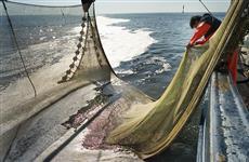 Самарские рыбколхозы угодили в сети правосудия