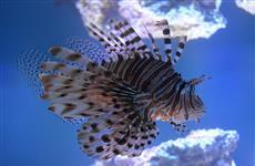 Журналистам показали самарский океанариум