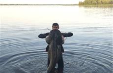Открыли сезон: тольятинский подвох добыл в Волге 70-килограммового сома