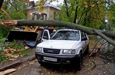 В Самаре ветер повалил дерево на мужчину