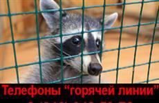 """В Самарской области работает """"горячая линия"""" для обращений в случае выявления контактных зоопарков"""