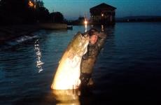 Три рыбины за центнер весом: в Жигулевском море подвохи столкнулись со стаей сомов