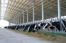 Global Vision может стать инвестором крупной фермы в Борском районе