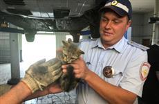 Сотрудники ГИБДД спасли котенка, забравшегося в машину