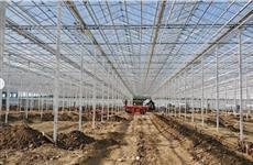 В Прикамье в этом году снимут первый урожай овощей, выращенных на защищенном грунте