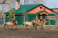 В Кинельском районе организуют сафари-парк для наблюдения за редкими животными