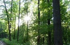 Прокуратура потребовала от минлесхоза поставить на кадастровый учет памятники природы