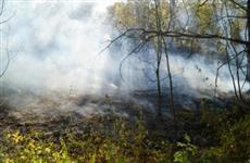 В Тольятти из-за лесных пожаров могут возбудить уголовное дело