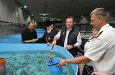 В Волгу выпустили 56 тыс. мальков стерляди, выращенной монахами