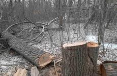 Деревья на 5-й просеке рубили, чтобы освободить площадку под школу