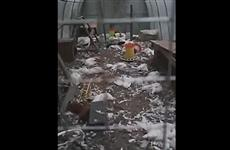 В Зубчаниновке бродячие собаки уничтожили 150 голов птицы в одном из хозяйств