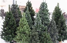 """Выбираем искусственную новогоднюю елку в """"Космопорте"""""""