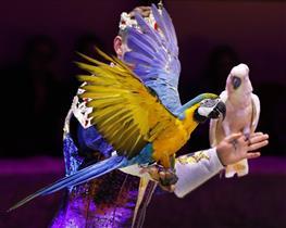 Королевский цирк Гии Эрадзе продолжает гастроли в Самаре