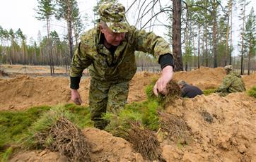 В Пермском крае по нацпроекту в 2019 году высадили более 10 млн сеянцев деревьев