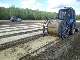 В Ибресинском лесничестве посеяли более 10 кг семян лесных культур
