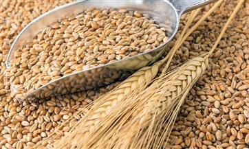 Импорт зерна