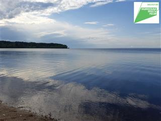 В Чердаклинском районе Ульяновской области возле СНТ почистят залив и лесные участки
