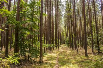 """В рамках национального проекта """"Экология"""" в Ульяновскую область поступили пять лесопатрульных комплексов"""