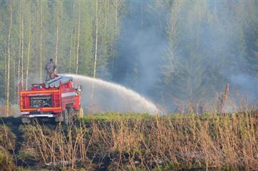 Благодаря нацпроекту в Пермском крае усилят работу по сохранению и восстановлению лесов