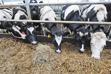 Семь сельскохозяйственных кооперативов открылись в Нижегородской области