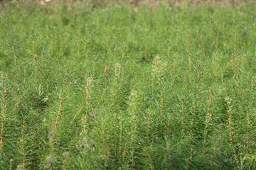 """В Пензенской области реализуются мероприятия по сохранению лесов в рамках нацпроекта """"Экология"""""""