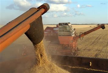 Производство зерна в Ульяновской области вырастет в полтора раза к 2024 году