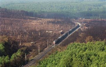 Площадь восстановления лесов в Башкирии вырастет на 24% по нацпроекту до 2024 года
