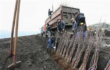 Около 690 га леса планируют восстановить в Самарской области в 2019 году