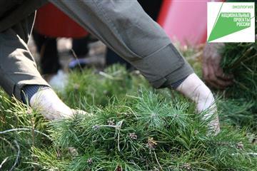 """Нацпроект """"Экология"""" помогает повысить качество лесовосстановления в Ульяновской области"""