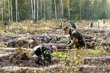 В Кировской области обследовано почти 5 тысяч гектаров леса