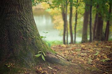 Пермскому краю выделено 57 млн рублей на лесовосстановление