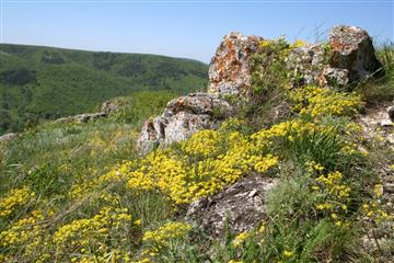 Особо охраняемые природные территории нуждаются в защите