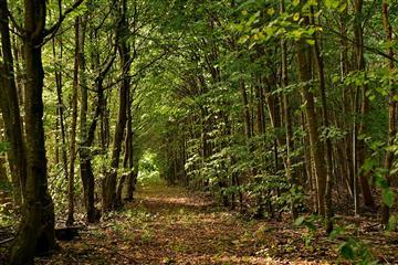 Для лесхозов Саратовской области приобретут новую технику
